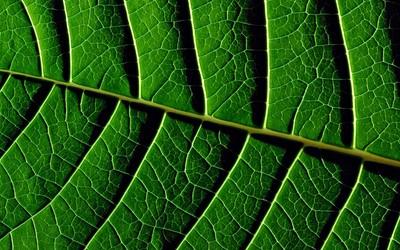 Leaf veins wallpaper