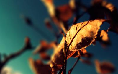 Leaves [9] wallpaper
