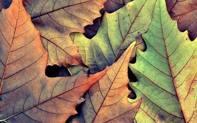 Leaves [2] wallpaper