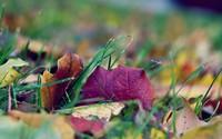 Leaves in grass wallpaper 1920x1200 jpg