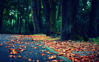 Leaves on the road wallpaper 1920x1080 jpg