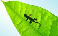 Lizard silhouette through a leaf wallpaper 1920x1200 jpg