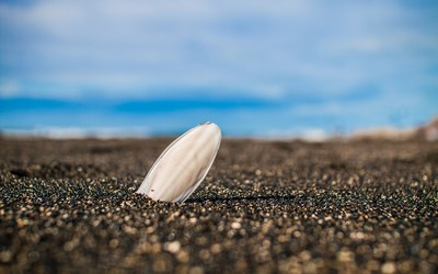 Lone shell in the sand wallpaper