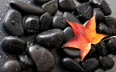 Maple leaf on shiny black pebbles wallpaper