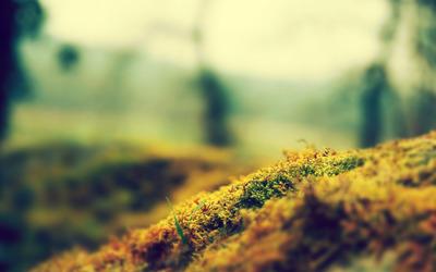 Moss wallpaper