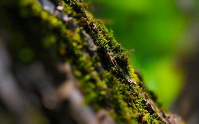 Moss [2] wallpaper