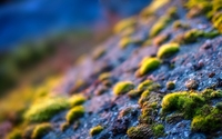 Moss on the rocks wallpaper 1920x1080 jpg