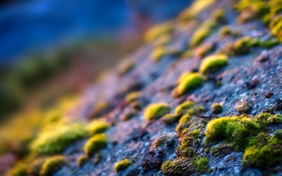 Moss on the rocks wallpaper