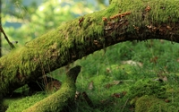 Mossy tree [2] wallpaper 2560x1600 jpg