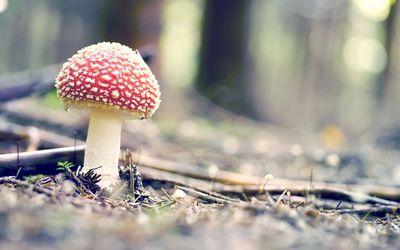 Mushroom [3] wallpaper