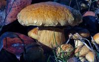 Mushroom with water drops wallpaper 2560x1600 jpg