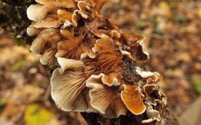 Mushrooms [19] wallpaper