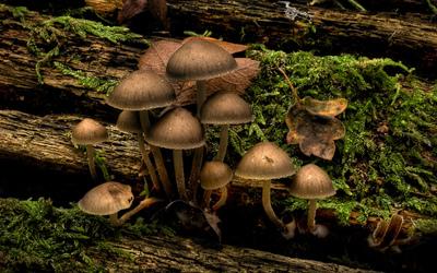 Mushrooms [6] wallpaper