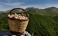Mushrooms in a basket wallpaper 1920x1200 jpg