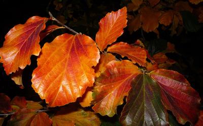 Orange leaves wallpaper