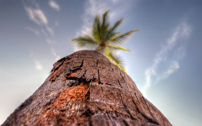 Palm bark wallpaper