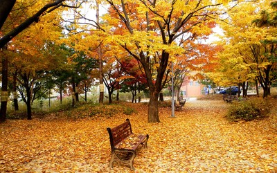 Park in the fall Wallpaper