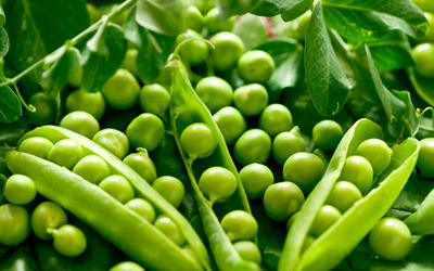 Peas wallpaper
