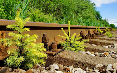 Pine trees growing on the railway Wallpaper