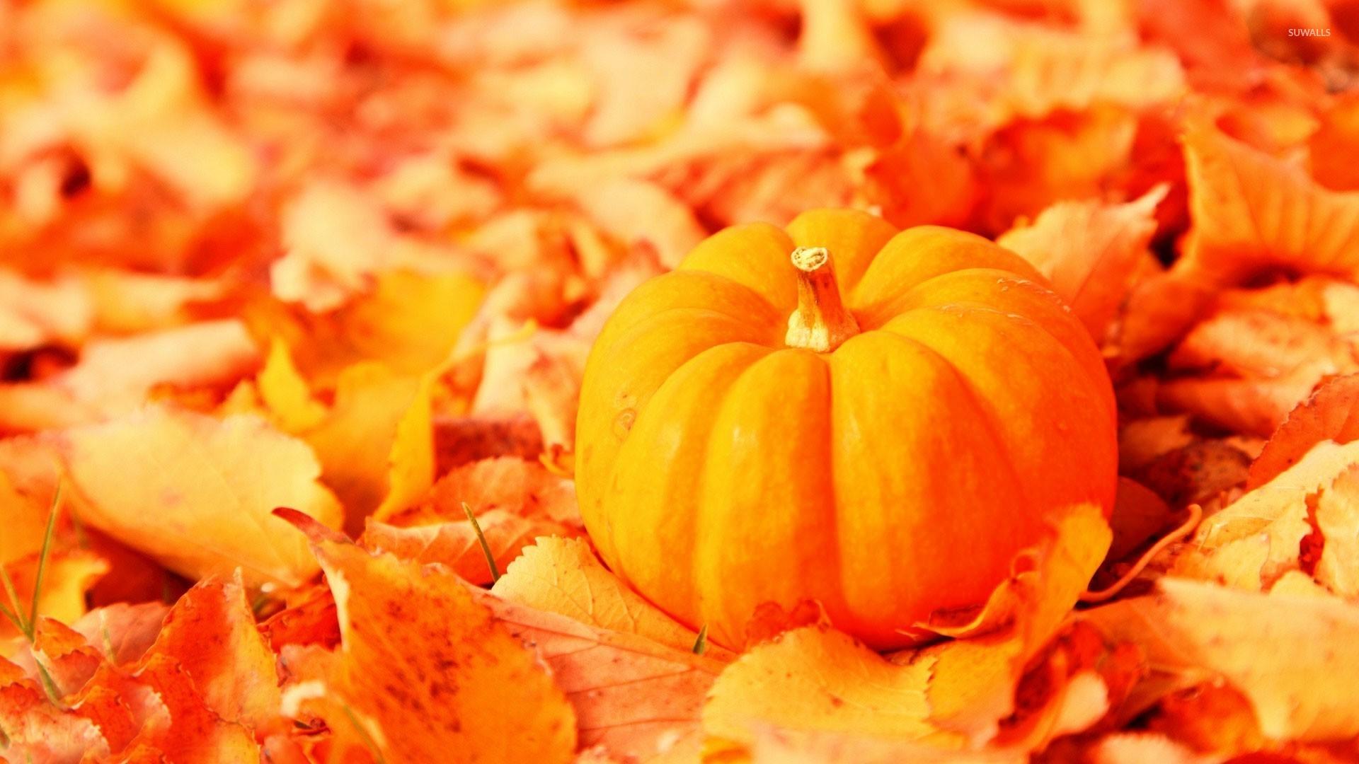 pumpkin wallpaper 1920x1080 - photo #13