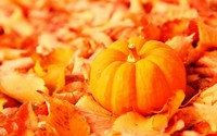 Pumpkin among the leaves wallpaper 1920x1080 jpg