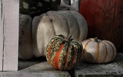 Pumpkins [2] wallpaper