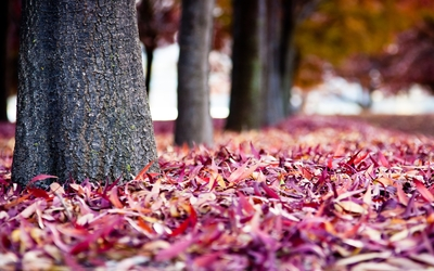 Purple autumn leaves wallpaper