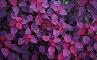 Purple leaves wallpaper 1920x1200 jpg