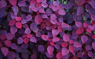 Purple leaves wallpaper