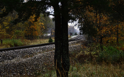 Railway through the forest wallpaper