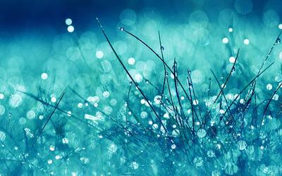 Rain drops on grass wallpaper