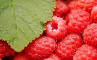 Raspberries wallpaper 1920x1200 jpg