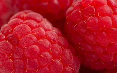 Raspberries [2] Wallpaper