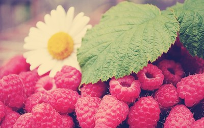 Raspberries and a daisy wallpaper