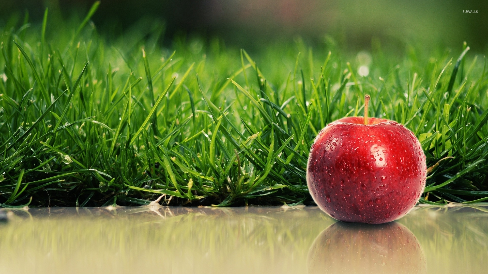 Red Apple With Water Drops By The Green Grass Wallpaper