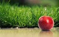 Red apple with water drops by the green grass wallpaper 1920x1080 jpg