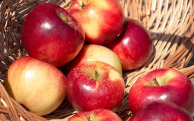 Red apples in a wicker basket wallpaper