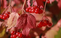 Red fruits wallpaper 3840x2160 jpg