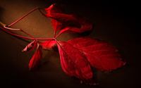 Red leaves [2] wallpaper 1920x1200 jpg
