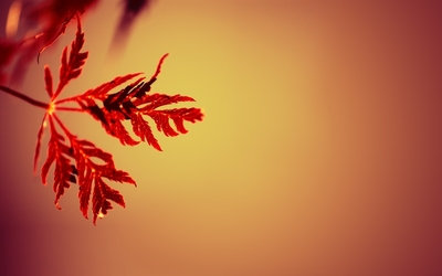 Red leaves [3] wallpaper
