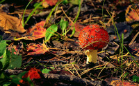Red mushroom [2] wallpaper 3840x2160 jpg