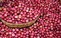 Red onions wallpaper 2880x1800 jpg