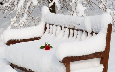 Red rose on the thick snow resting on the wooden bench wallpaper
