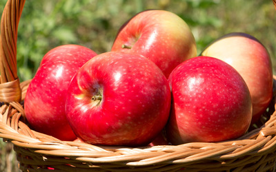 Red shiny apples Wallpaper