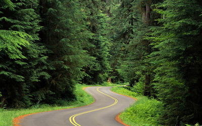 Road through the pine forest wallpaper