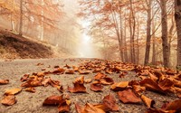 Rusty leaves on the forest road wallpaper 1920x1200 jpg