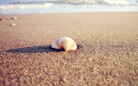 Sea Shell on the Beach wallpaper 2560x1600 jpg