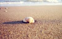 Sea Shell on the Beach wallpaper 2560x1600 jpg
