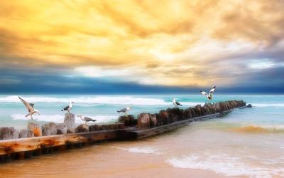 Seagulls on a wooden pier wallpaper