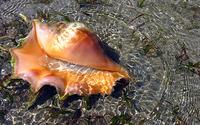 Seashell in water wallpaper 1920x1200 jpg